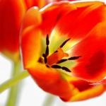 martina_escuderowolf_Spring